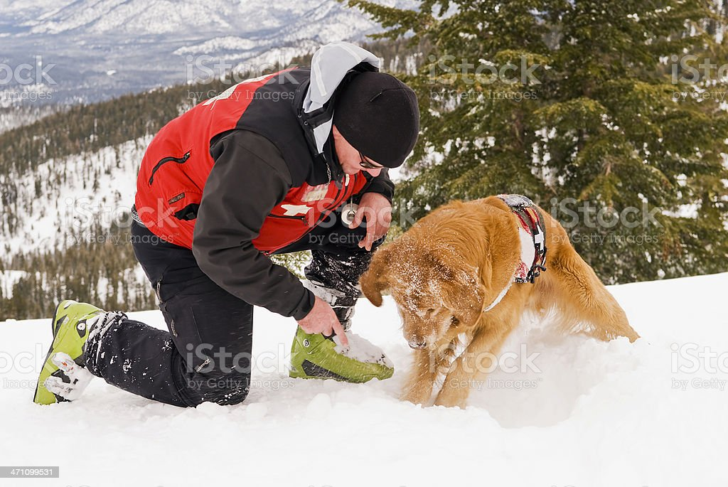 Rescue Dog working stock photo