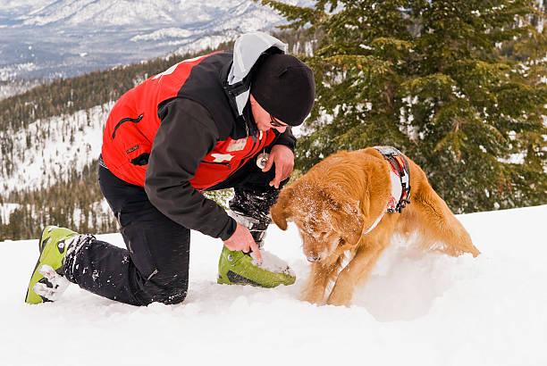 rescue dog training - lake tahoe winter stock-fotos und bilder
