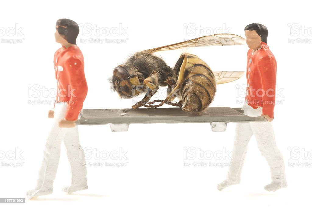 rescue hornet stock photo
