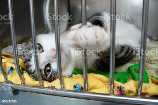Rescue kitten reaches a paw out of its cage picture id954474640?b=1&k=6&m=954474640&s=612x612&h=tcgoraee9svq7x6opuvsyzat09ybk2gdkvz9mrpacx4=