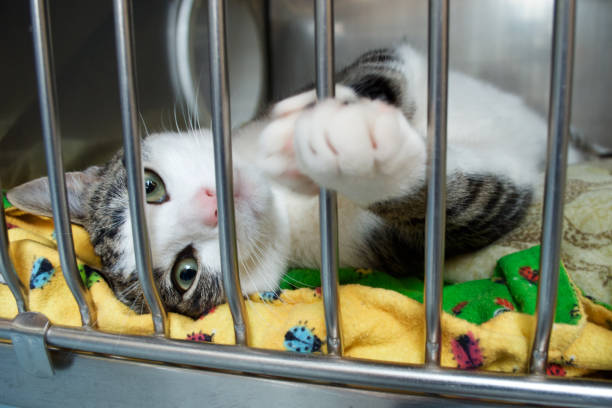 A rescue kitten reaches a paw out of its cage stock photo