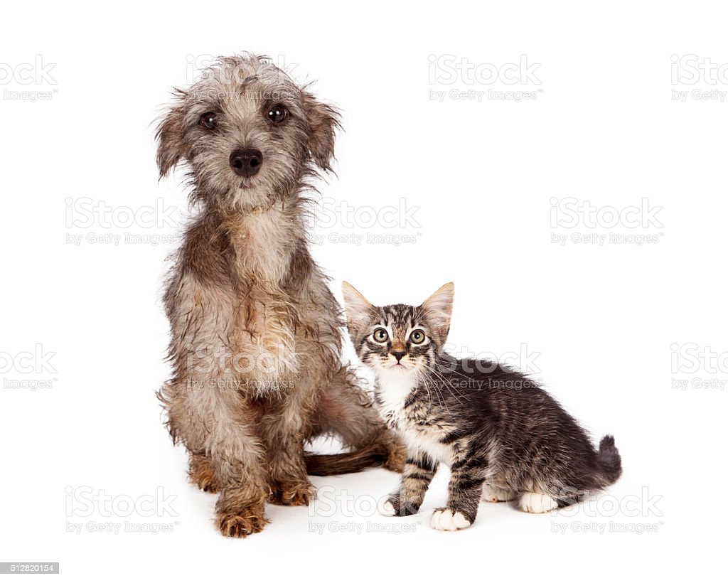 Rescue Little Dog And Kitten To her stock photo