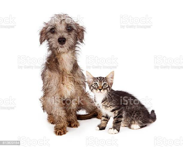 Rescue little dog and kitten together picture id512820154?b=1&k=6&m=512820154&s=612x612&h=epbsqz46y8lxv1tu6a4yrblfpqkiklaxqsn d2y0wp4=