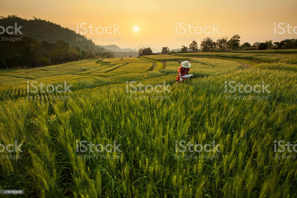 Research & Development the Barley Field/file_thumbview/66069813/1