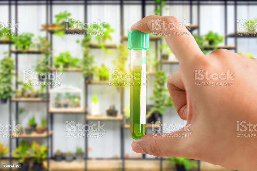 research herbal medicine at lab stock photo
