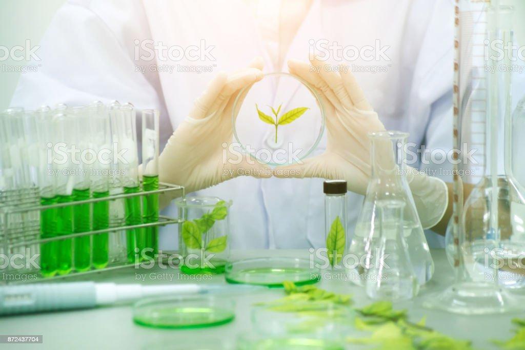 Médecine de fines herbes de recherche au laboratoire, test pharmaceutique - Photo