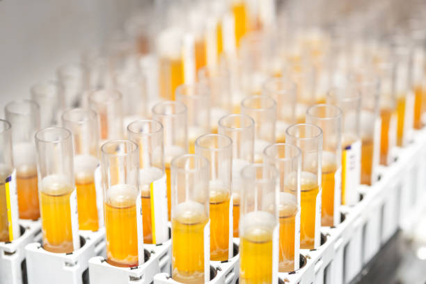 research in the laboratory, test tubes stock photo