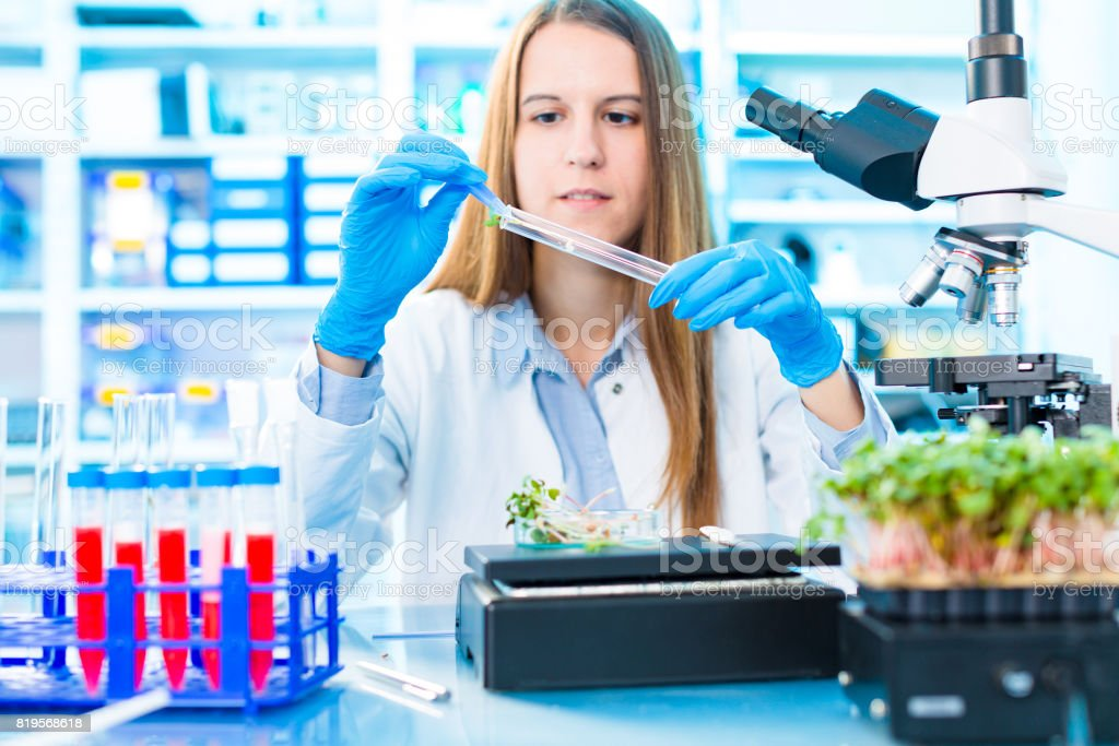 Research of photosynthesis of green plants. Food quality control of agricultural plans stock photo