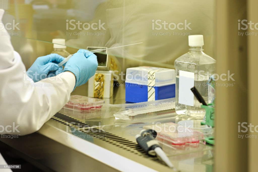 research scientist at work stock photo