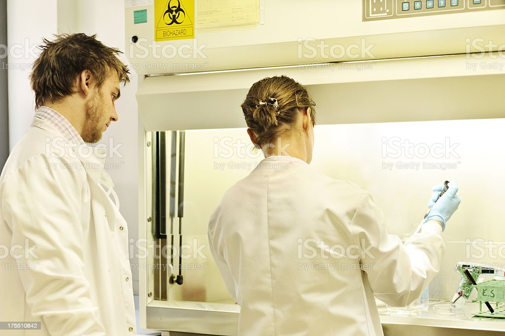 research scientists at work stock photo
