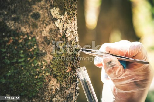 Researcher in the forest examines trees.