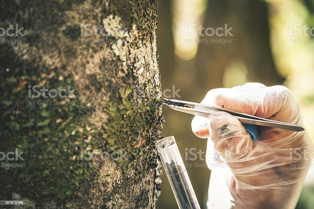 Researcher in the forest stock photo