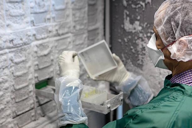 ricercatore look per i campioni in un congelatore a temperatura scientifica - criobiologia foto e immagini stock