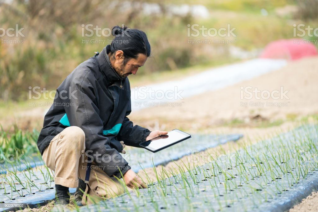 Researcher or farmer monitoring new crops and plant growth with tablet computer stock photo