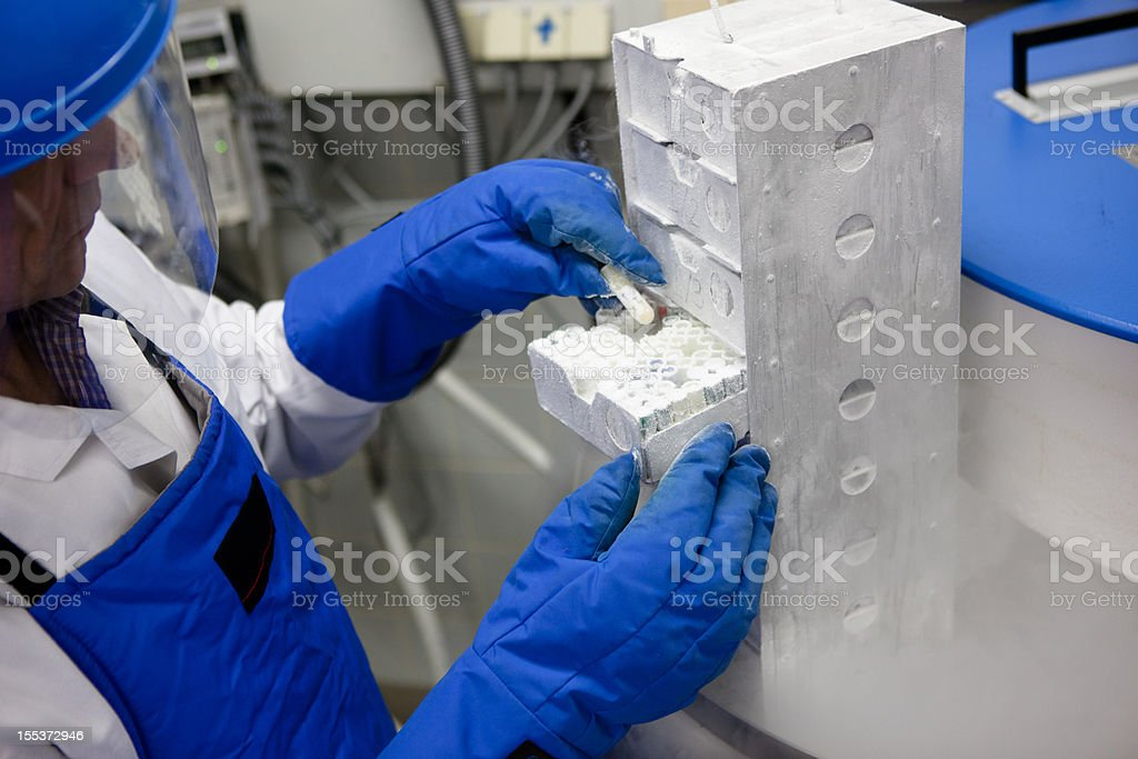 researcher working at a Container with liquid nitrogen stock photo