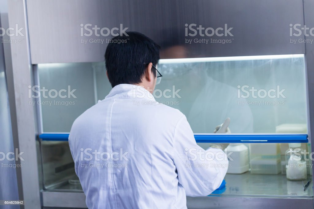 Researcher working in the clean hood stock photo