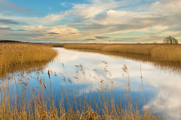 rspb reserve newport wetlands, newport, wales - wildlife reserve stock pictures, royalty-free photos & images