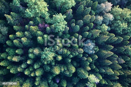 istock Reserved wood 464736046