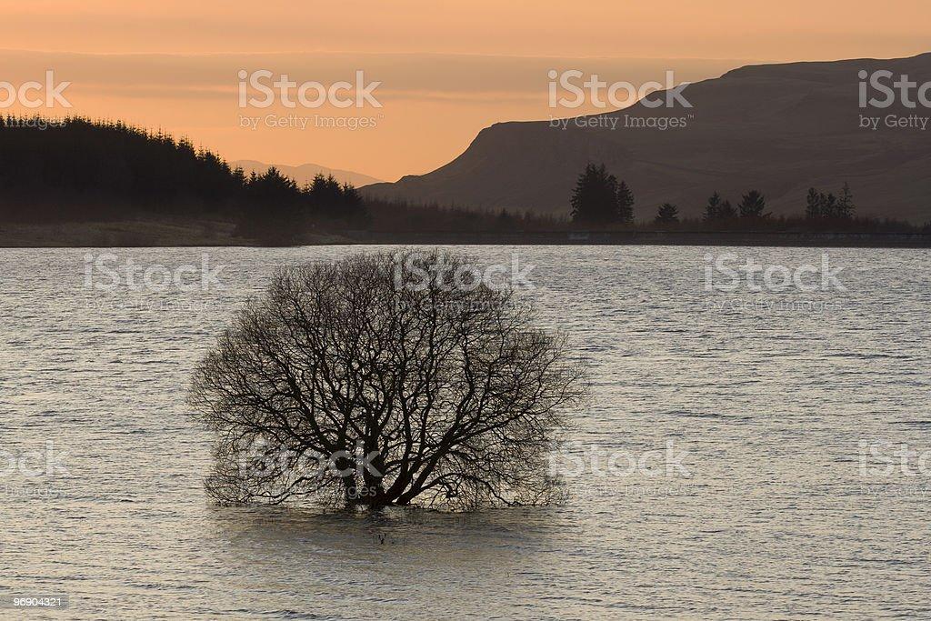 reservoir tree royalty-free stock photo