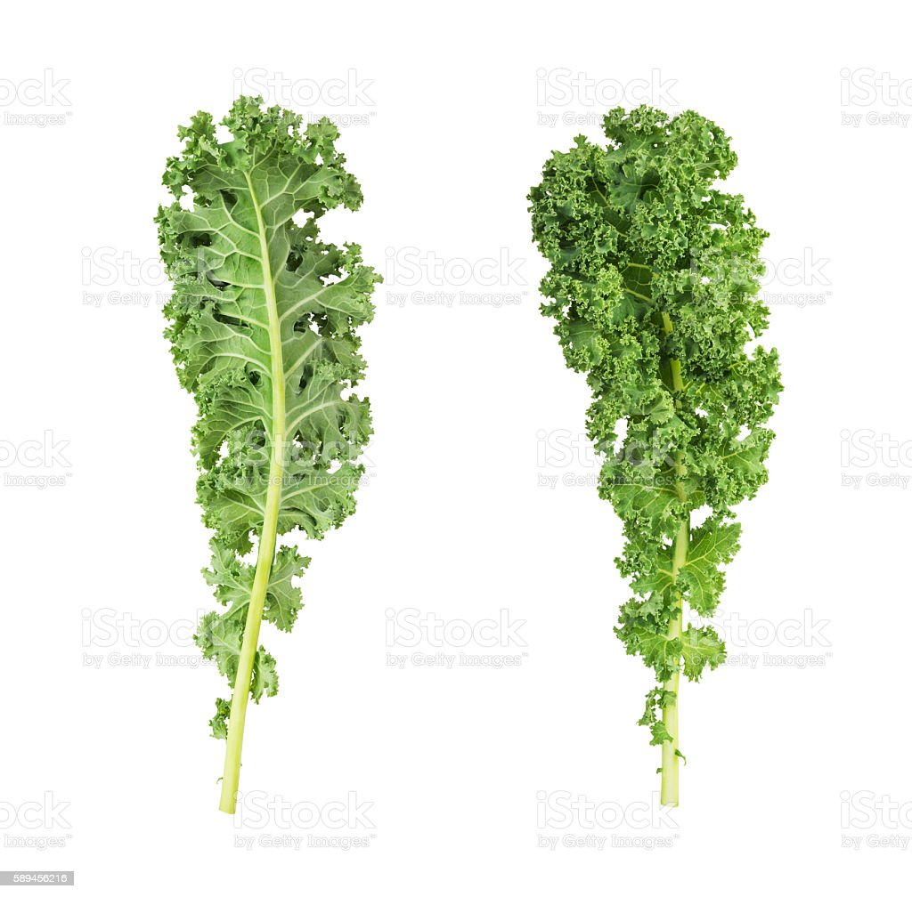 resh green kale leaves stock photo