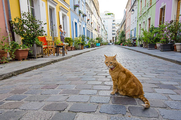 Resident cat sits in the middle of Rue Cremieux in Paris stock photo