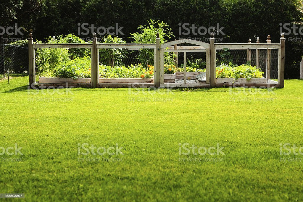 A fenced in flowers and vegetables home garden in the backyard lawn.