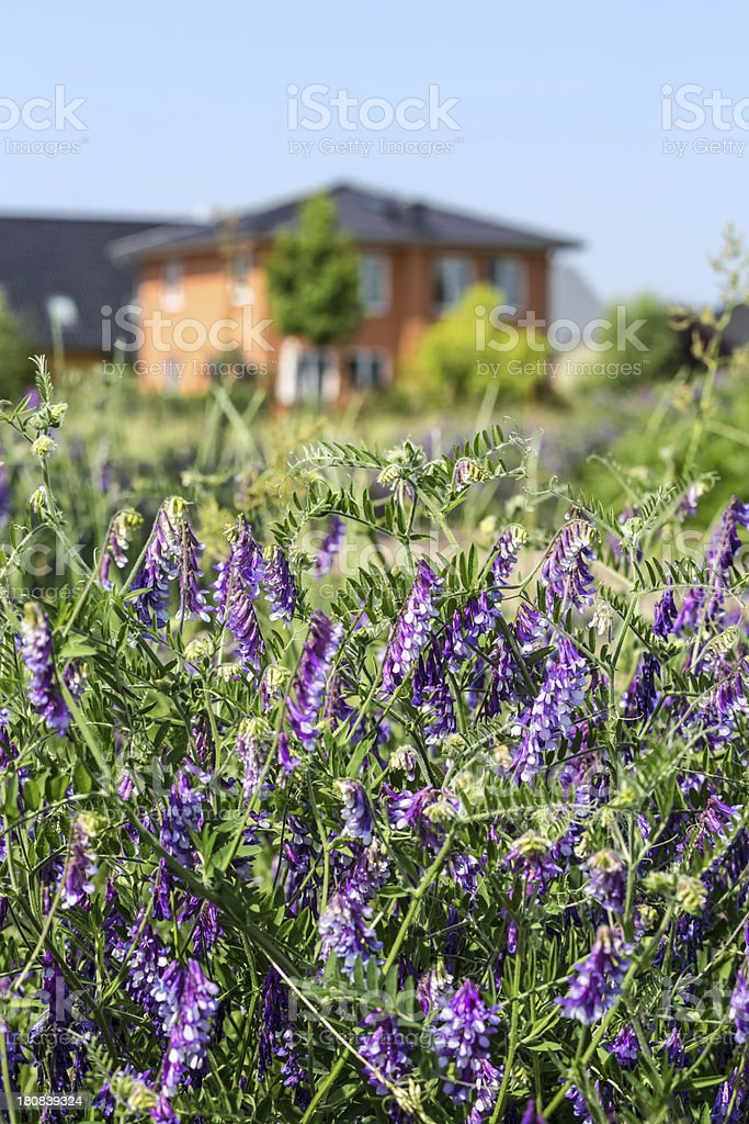 Residential Home in summertime royalty-free stock photo