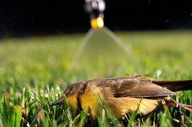 residential pesticide use claims another victim - mike cherim stock pictures, royalty-free photos & images