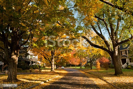 A residential road in Newton, MA in fall