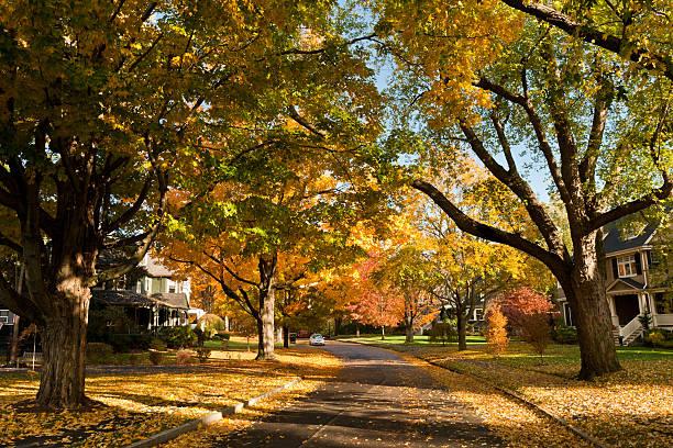 residential road in newton, ma in fall - massachusetts stockfoto's en -beelden