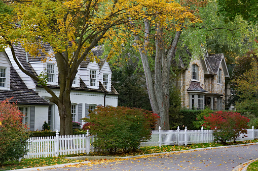 residential street  with mature trees and fall color