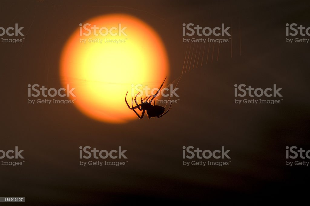 Resilent Spider Sunset CA Fires royalty-free stock photo