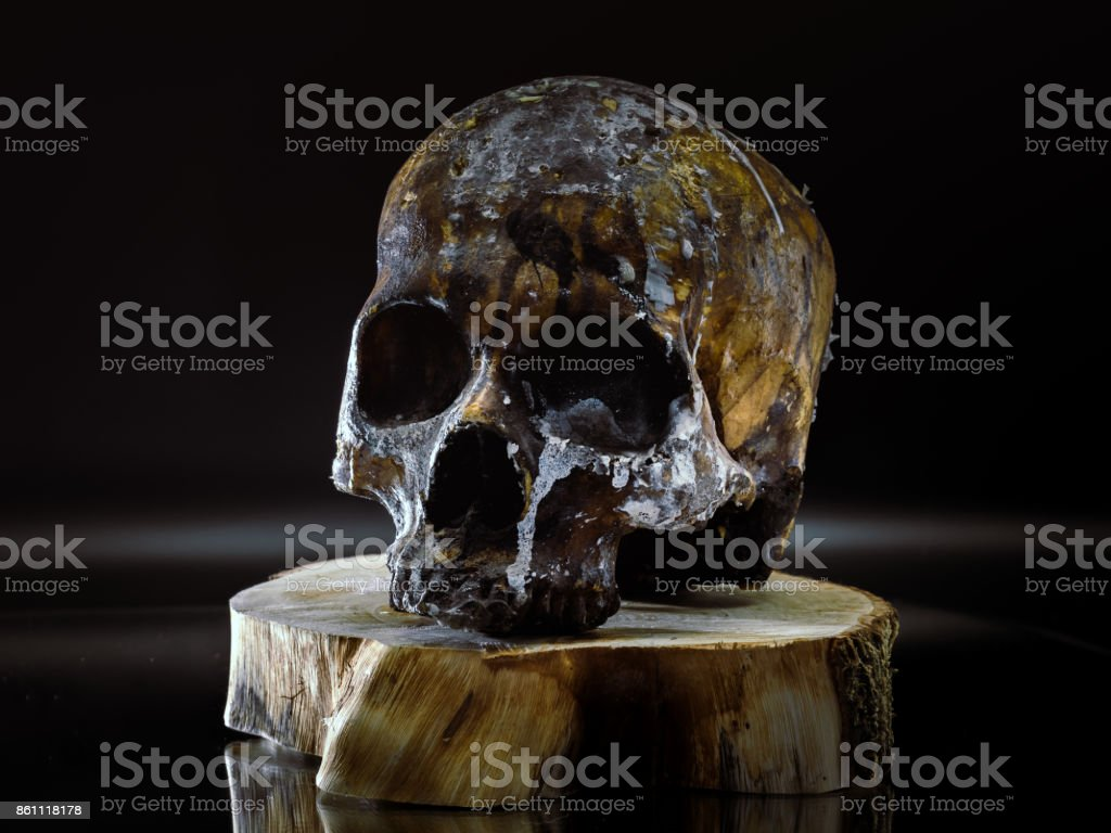 Resin Made Skull closeup stock photo
