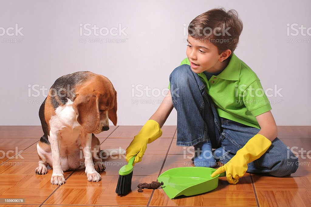 Responsible Dog Owner stock photo