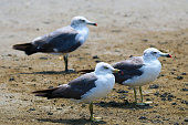 The gulls are resting comfortably.