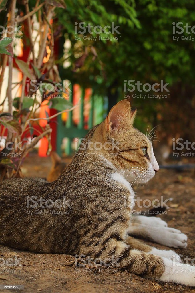 rest time of a cat royalty-free stock photo