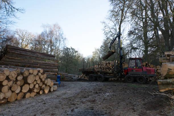 Restacking the log piles stock photo