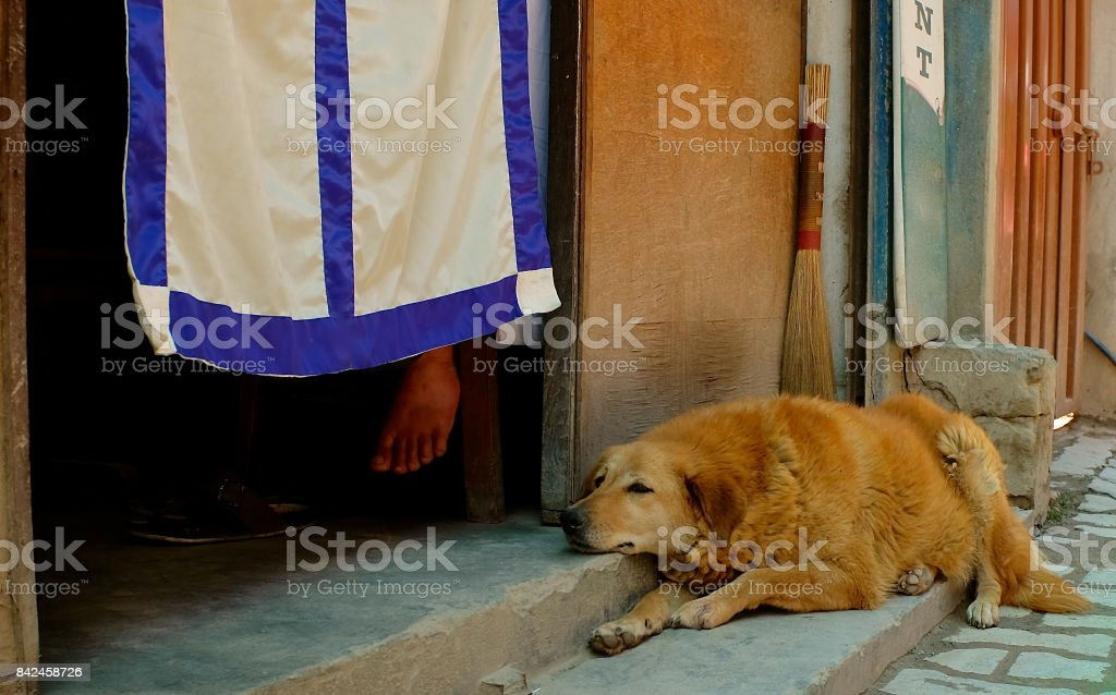 Communal dog lying in front of a restaurant in Kathmandu, Nepal
