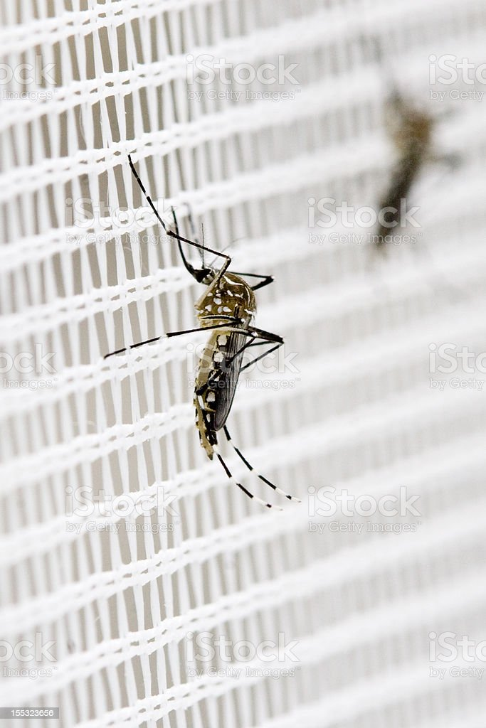 Resting mosquitoes royalty-free stock photo