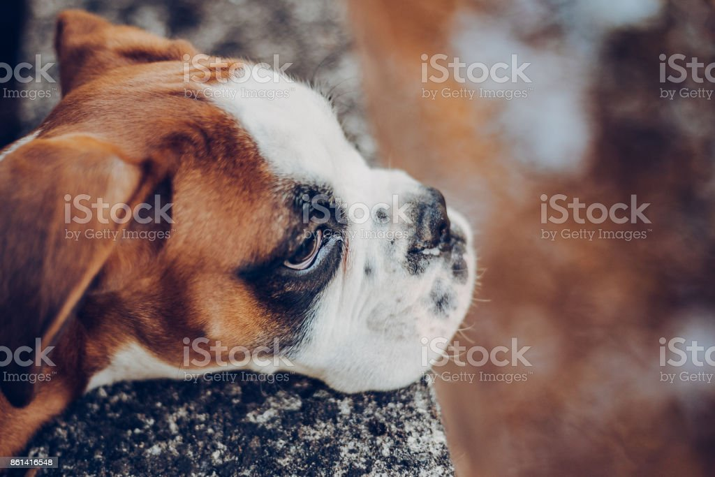 Resting of walk... stock photo
