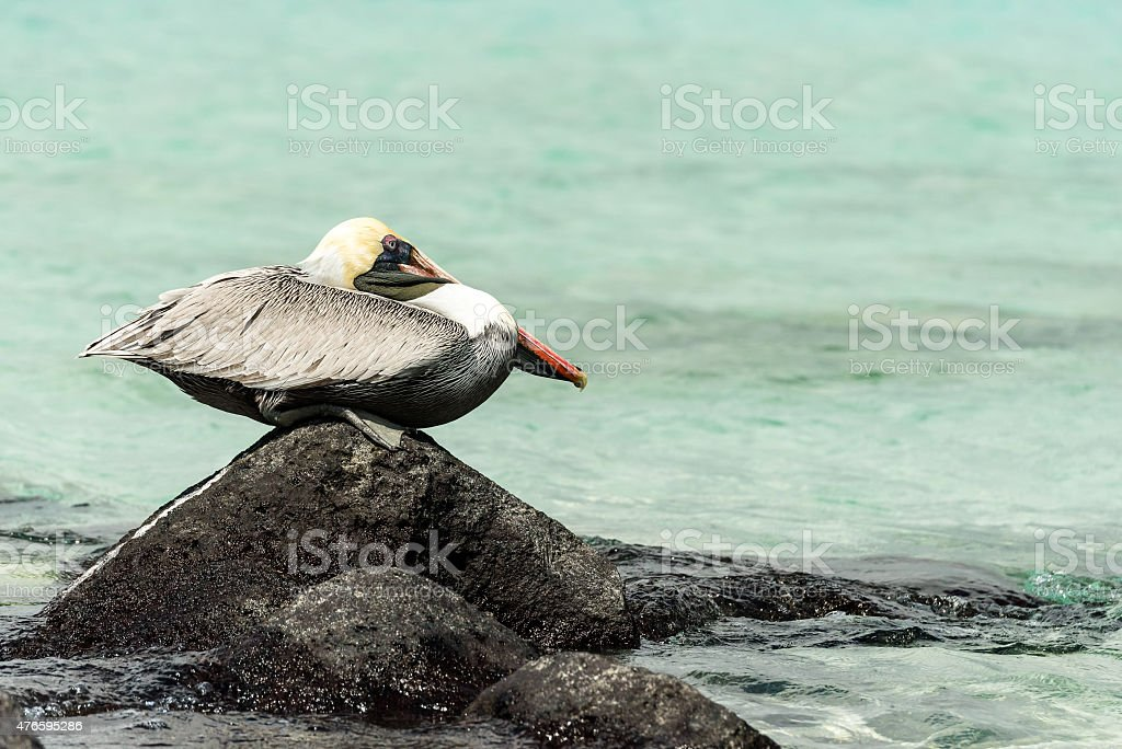 Resting on a Rock stock photo