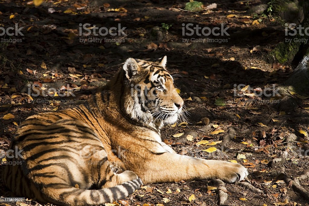 Resting royalty-free stock photo