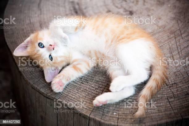 Resting picture id864407250?b=1&k=6&m=864407250&s=612x612&h=5mrg3x3nebnhzdgt6werxd50nv3c0zmm9fjm9ptynyy=