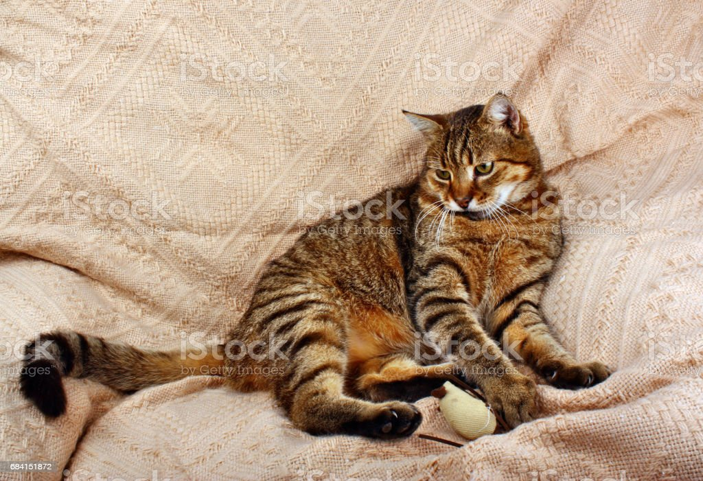 Resting relax cat lying royaltyfri bildbanksbilder