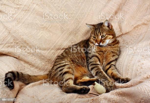 Resting relax cat lying picture id684151872?b=1&k=6&m=684151872&s=612x612&h=x68axhzddktqahldrfqgxur1jf1ozmtkkp67v9xu3iy=