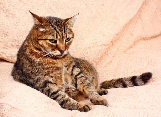Resting relax cat picture id641741758?b=1&k=6&m=641741758&s=612x612&w=0&h=zabcrs1mcyc3mt7j ebripyytvu2wvucir8b srrbkg=