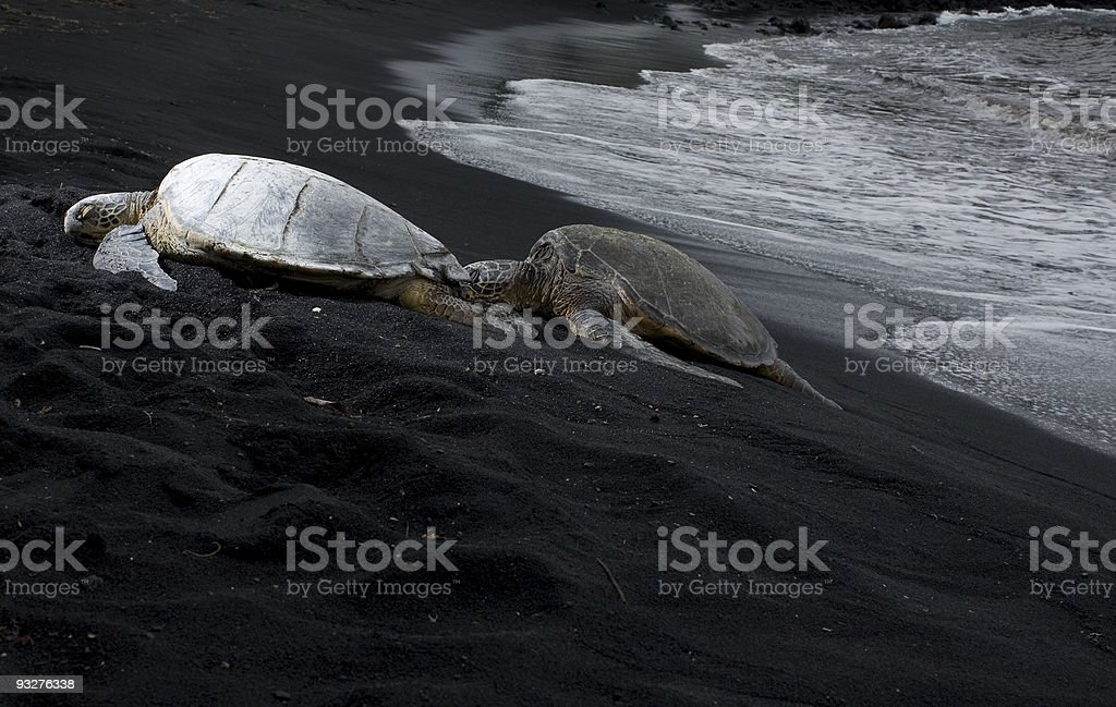 resting sea turtles stock photo