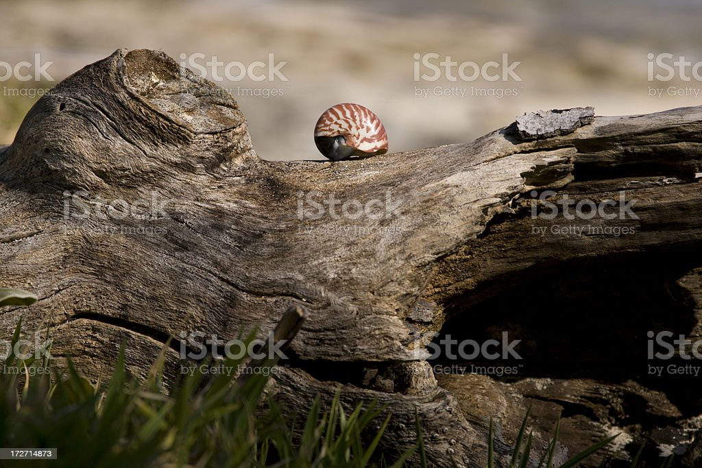 resting shell royalty-free stock photo