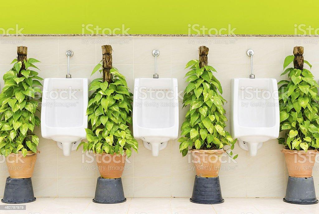 Fotograf a de ba o con interior blanco orinal row y plantas decorativas y m s banco de im genes - Plantas decorativas interior ...