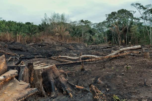 result of the deforestation of the rainforest with burnt down fields and extensive logging result of the deforestation of the rainforest with burnt down fields and extensive logging island of borneo stock pictures, royalty-free photos & images